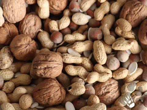 noten en pitten mix